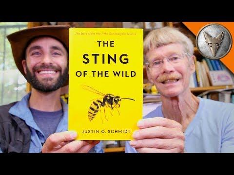 Origin of STINGS!