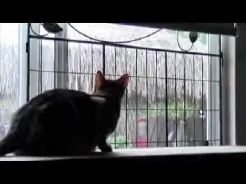 Cat Guards For Windows Cat Window Screen Protection