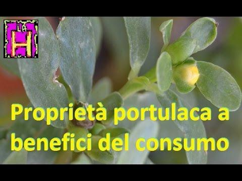 le proprietà della portulaca e i benefici derivanti dal suo consumo!
