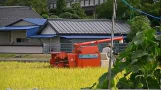 Rice Harvesting Machine In Action