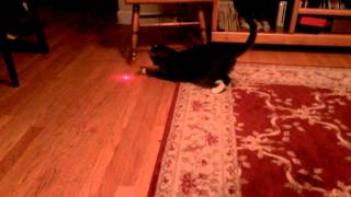 This Is So Evil: Cat With Laser Pointer On Head