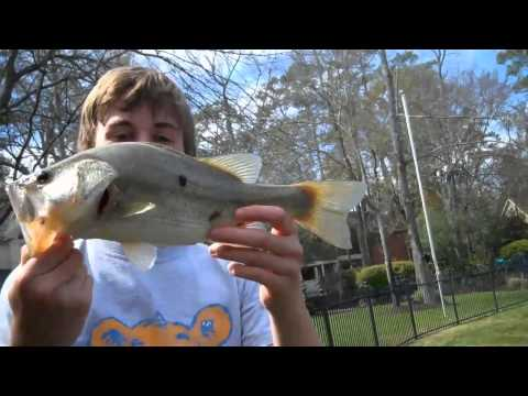 Pond Fishing Spawning Bass