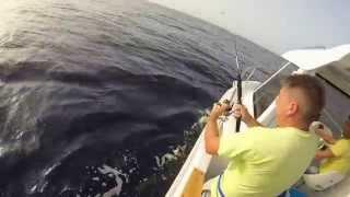 Video Pesca embarcada Madeira MP3, 3GP, MP4, WEBM, AVI, FLV Desember 2017
