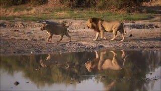 90 Seconds in Savuti, Botswana