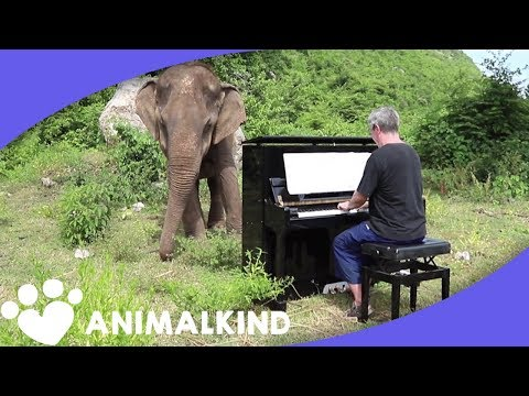 How The Power Of Music Brought Peace To This Elephant