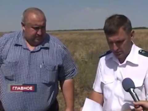 Россельхознадзор выявил очаги произрастания амброзии в Республике Калмыкия.