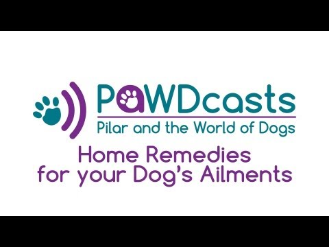 how to treat upset stomach in a dog