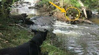 Video Anjing Pemburu Menemukan MAKHLUK BEROTOT KEKAR Sedang Mandi Di Sungai, Semua Kaget Saat Mendekat! MP3, 3GP, MP4, WEBM, AVI, FLV Oktober 2017