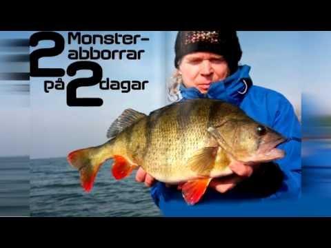 рыбалка на самого крупного окуня