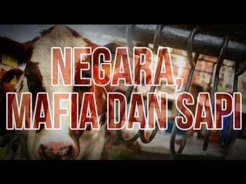 Negara, Mafia dan Sapi
