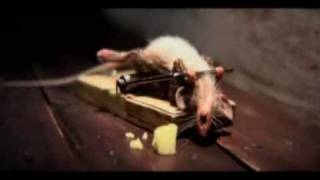 funny mouse doing push ups