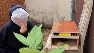 Video Pertama Kali Ternak Lebah (Apis Cerana) MP3, 3GP, MP4, WEBM, AVI, FLV Januari 2019