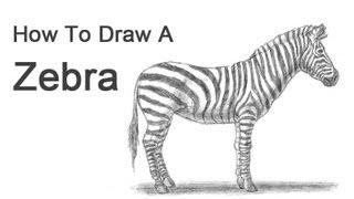 Видео урок: как нарисовать Зебру простым карандашом