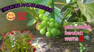 Video YEAAHH ANGGUR NUMBUH TAHUN INI‼🍇🍇🌹🍎🍒 MP3, 3GP, MP4, WEBM, AVI, FLV Juli 2019