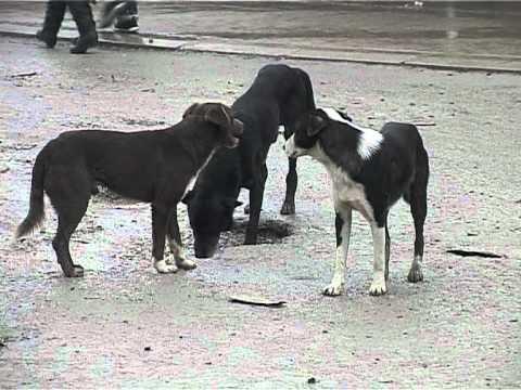 garat e qenve - Vizitoni www.oranews.tv për të ndjekur lajmet e fundit nga Vendi, Rajoni dhe Bota.