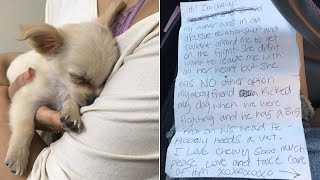 Dog Is Abandoned By Her Owners Outside An Airport For The Most Heinous Reason by Did You Know Animals?
