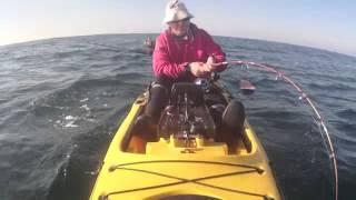 Video Pesca de Corvina en kayak. 28,6 kgs MP3, 3GP, MP4, WEBM, AVI, FLV Desember 2017