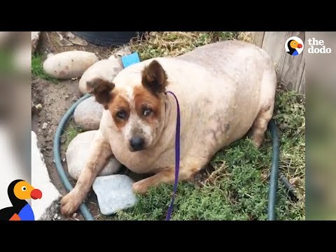 Overweight Dog Finally Knows What Love Feels Like | The Dodo