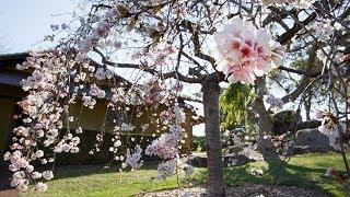 Cowra Australia  City new picture : Japanese Garden, Cowra
