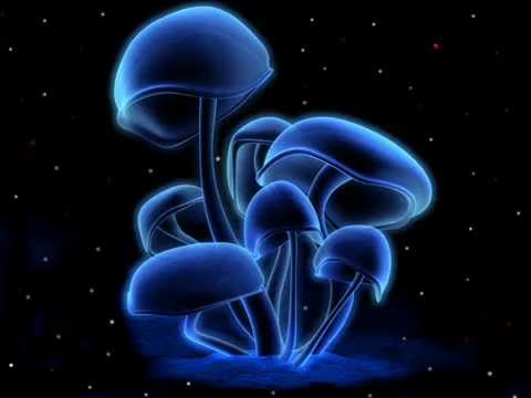mushroom - Take it to your top and now watch me get in Feel this on the sun and let the vibe in Don't you feel the rain drops are near? You're the only tool to Reggae m...
