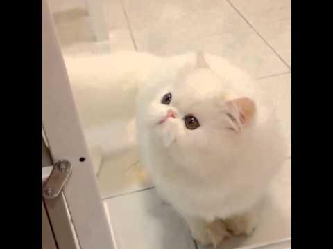 My Funny Cat   Ready Go    Athena!