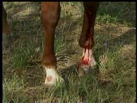 Strangers help after trailer crashes, injuring horses