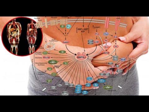 ormoni, macronutrienti e calorie
