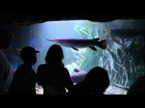 Pattaya Attractions – Pattaya Underwater World