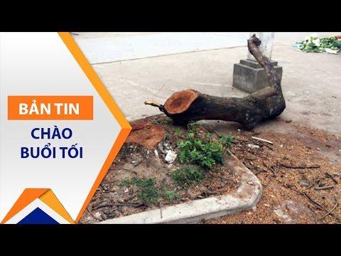 Hà Nội: Dọn vỉa hè, chặt hàng chục cây xanh | VTC - Thời lượng: 82 giây.
