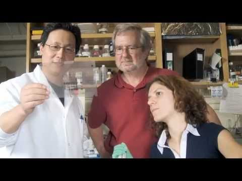 SU2C-CRI Cancer Immunology Translational Research Dream Team