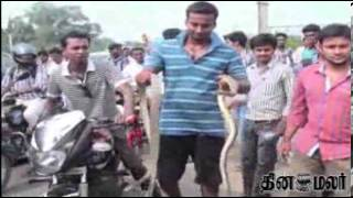 Snake on Traffic Road at Trichy - Dinamalar Video News