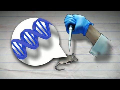 comment modifier genetiquement une plante