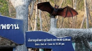 タイの自然景観コウモリ寺(カオチョンプラン)