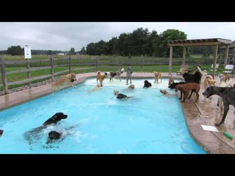 "The dogs at the ""Lucky Puppy"" doggy daycare in Maybee, Michigan know how to beat the heat."