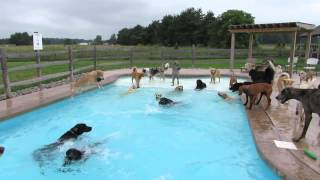 Just A Pool Full Of Dogs
