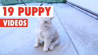 Nonton 19 Puppy Videos Compilation 2017 Film Subtitle Indonesia Streaming Movie Download