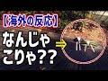 【海外の反応】衝撃!『精霊馬』は日本の盆の風物詩!あのキュウリとナスが海外で話題に!海外「なんじゃこりゃ??」「日本の魔術…?」