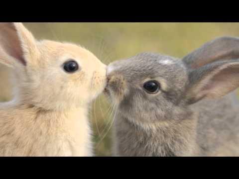 ecco i più belli tra gli animali