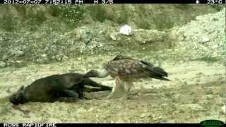 Vale Gier en Wild Zwijn Haccourt