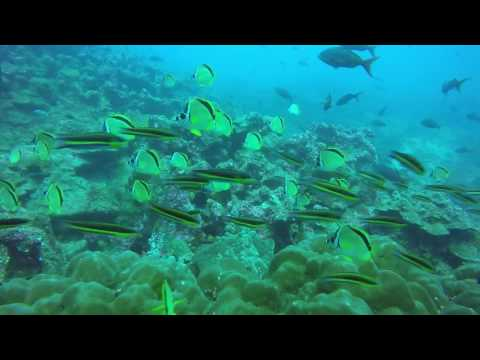 Galapagos with Galapagos Master Aug2016 Day 1&2_Legjobb vide�k: Mer�l� helyek