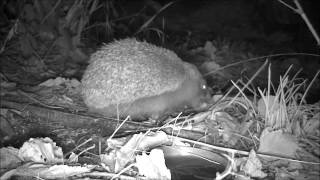 Wildlife Trail Camera - 20.10.2016