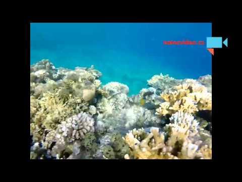 Egypt Sharm-el-sheikh moře