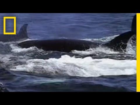 Whale Migration Marathon | Animal Winter Games