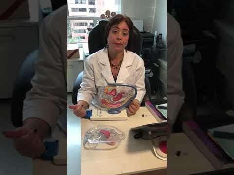 Gloria Ines Lopera Bonilla  Ginecólogo, Médico biológico