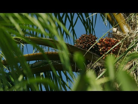 Watch: Improving standards in biofuels production