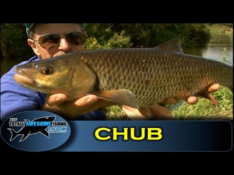 Legering in rivers for Chub - Totally Awesome Fishing Show (видео)