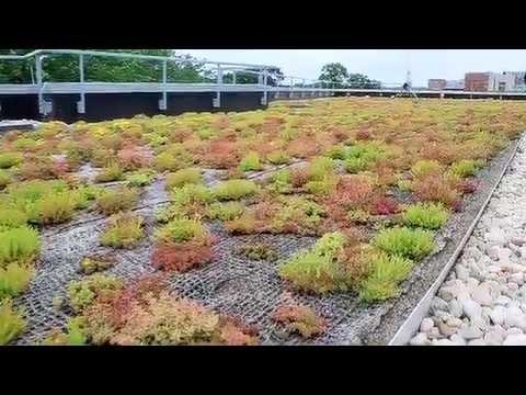 Když se střechy zelenají…