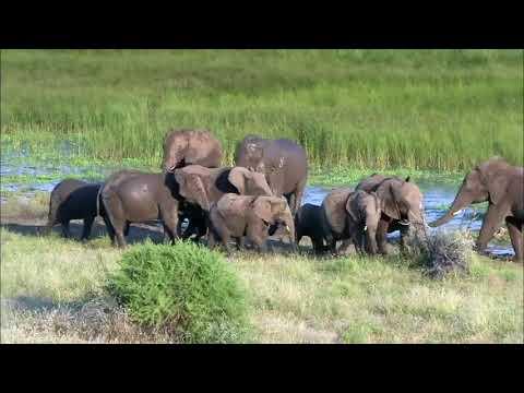 Tuli trail safari