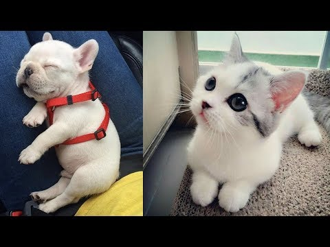 Cute baby animals Videos Compilation cute moment of the animals Soo Cute! #30