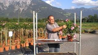 #9 Selber Kübelpflanzen vermehren